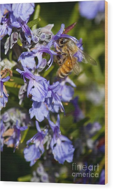 Sweet Rosemary Wood Print