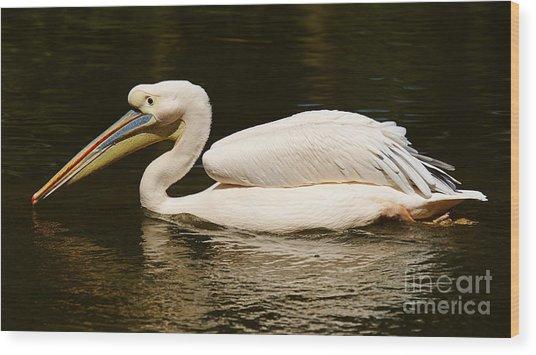 Swimming Pink Pelican Wood Print