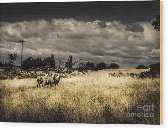 Tasmania Landscape Of An Outback Cattle Station Wood Print
