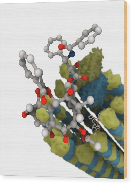 Taxol Chemotherapy Drug And Microtubule Wood Print by Ramon Andrade 3dciencia/science Photo Library