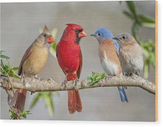 The Bluebirds Meet The Redbirds Wood Print