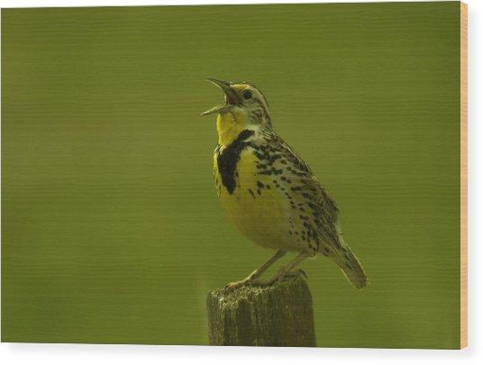 The Meadowlark Sings Wood Print