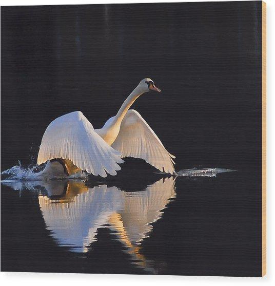 The Swan Of Zoar Wood Print