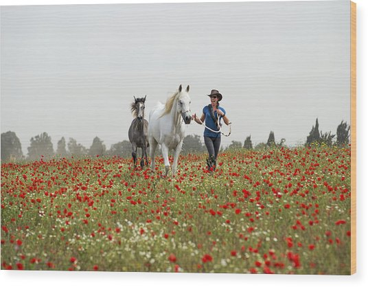 Three At The Poppies' Field... 3 Wood Print
