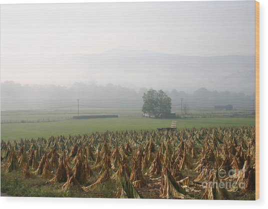 Tobacco In The Field Wood Print