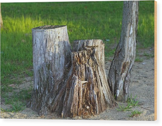 Tree Stump Wood Print