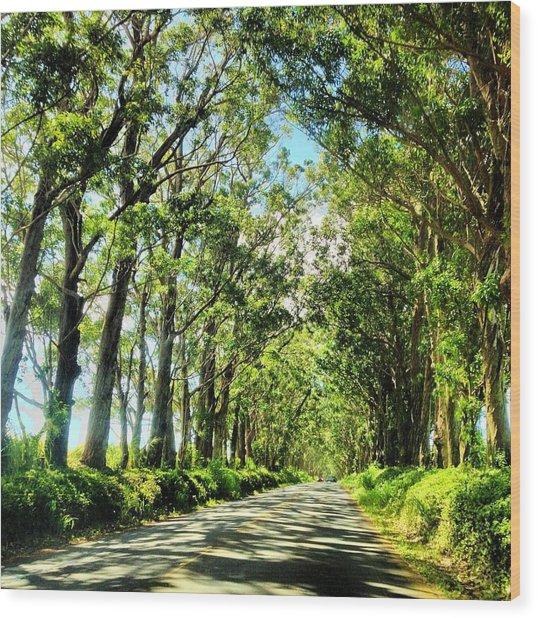 Tree Tunnel Wood Print by Lannie Boesiger