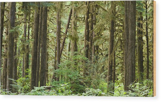 Trees In A Forest, Quinault Rainforest Wood Print