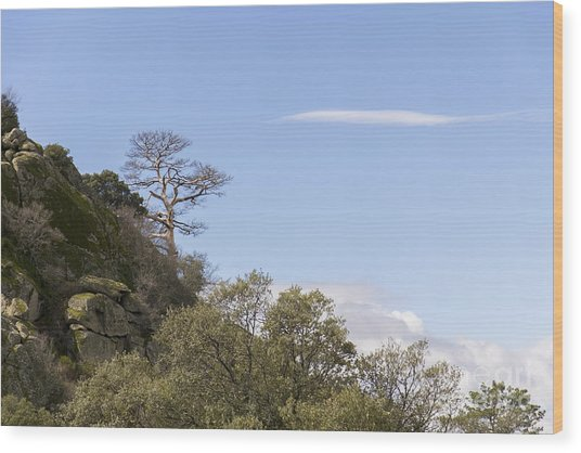 Trees In The Mountains Wood Print