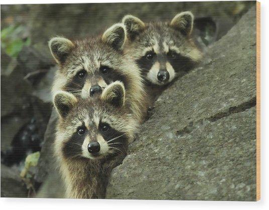 Tres Banditos Wood Print