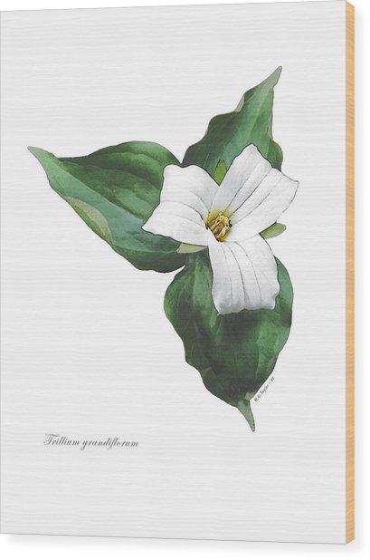 Trillium 1 Wood Print