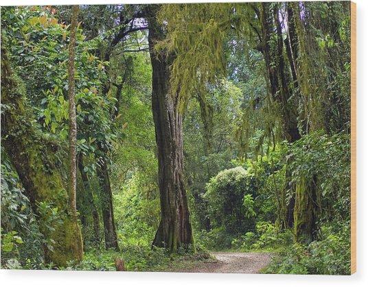 Tropical Rainforest Wood Print