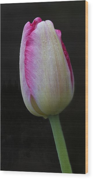 Tulip Bright Wood Print
