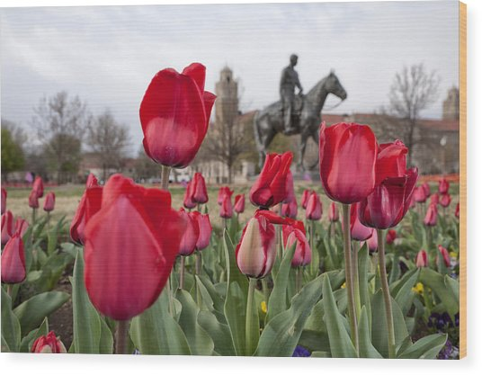 Tulips At Texas Tech University Wood Print