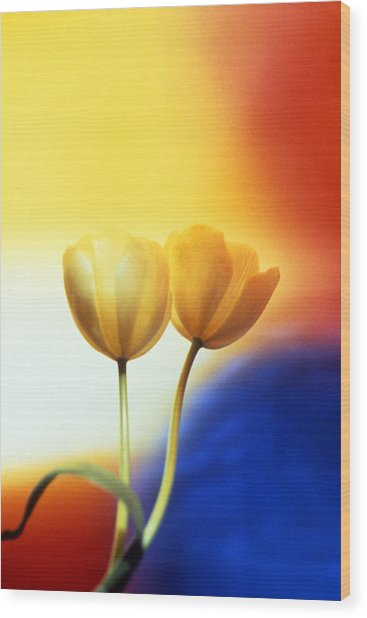 Tulips  Wood Print by Etti PALITZ
