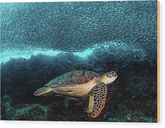 Turtle And Sardines Wood Print by Henry Jager