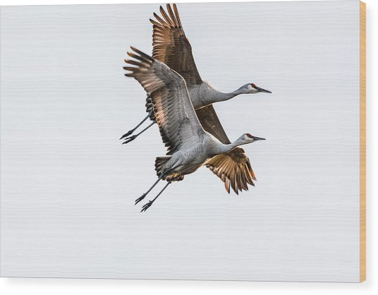 Two Sandhill Cranes Wood Print