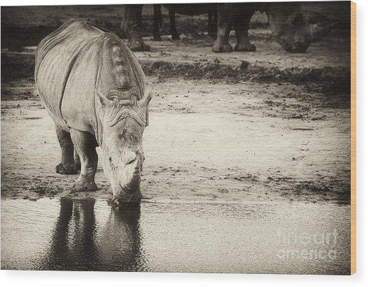 Two White Rhinos  Wood Print
