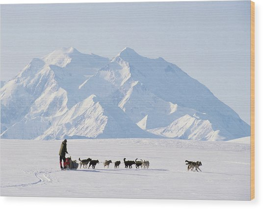 Usa, Alaska, Sled Dogs, Park Ranger Wood Print
