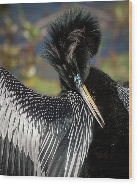 Usa, Florida, Everglades National Park Wood Print