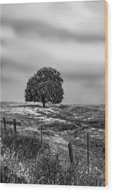 Valley Oak Majesty Wood Print