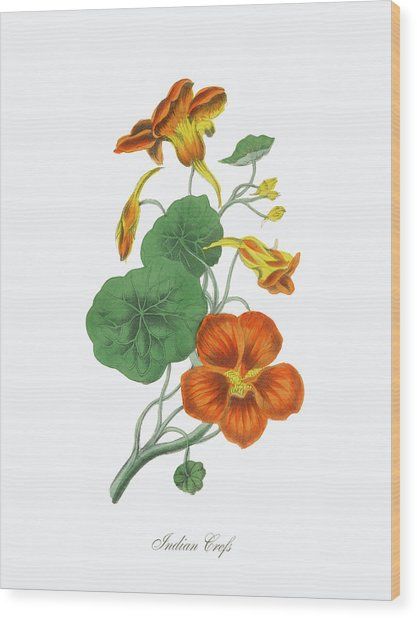 Victorian Botanical Illustration Of Wood Print by Bauhaus1000