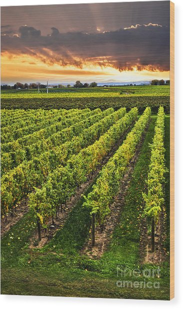 Vineyard At Sunset Wood Print