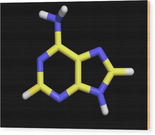 Vitamin B4 Wood Print by Dr Tim Evans/science Photo Library