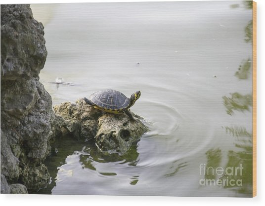 Water Turtle Wood Print