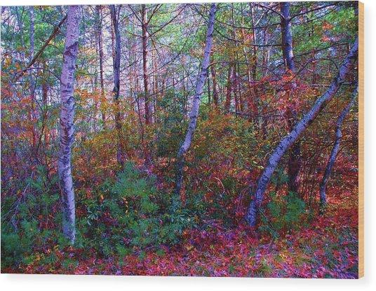 White Birch - Pocono Mountains Wood Print