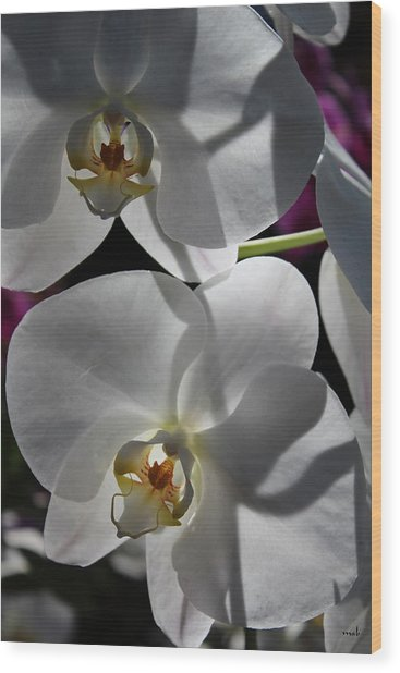 White Orchid Two Wood Print by Mark Steven Burhart