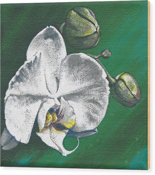 White Orchids II Wood Print