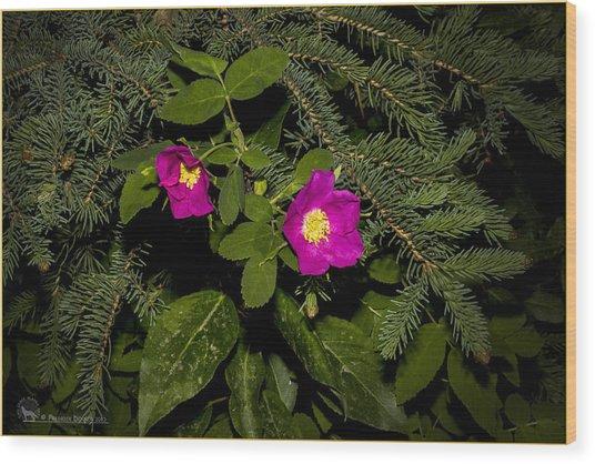 Wild Roses Wood Print