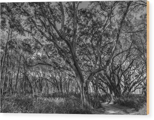 Wind Swept Trees Wood Print
