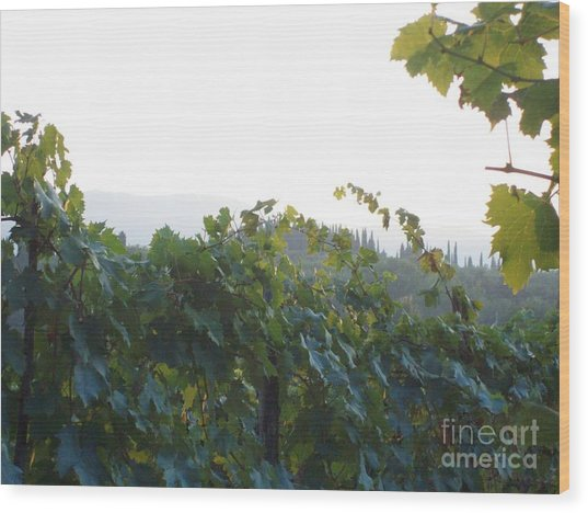 Wine Yards In Loppiano Wood Print