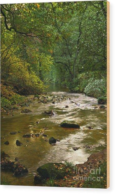 Woodland Stream In Autumn Wood Print