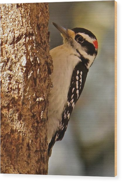 Woodpecker 109 Wood Print by Patsy Pratt
