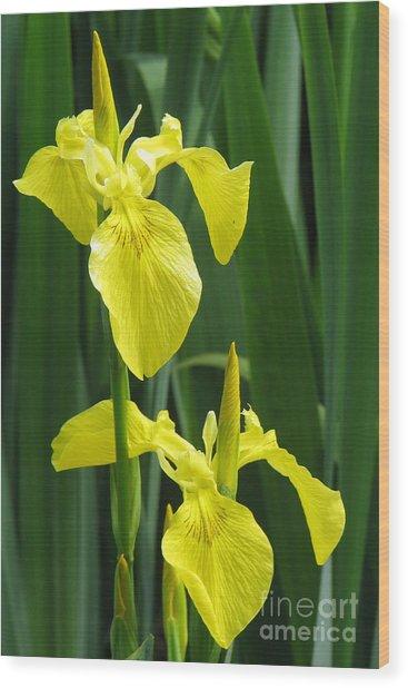 Yellow Iris Wood Print by Frank Townsley