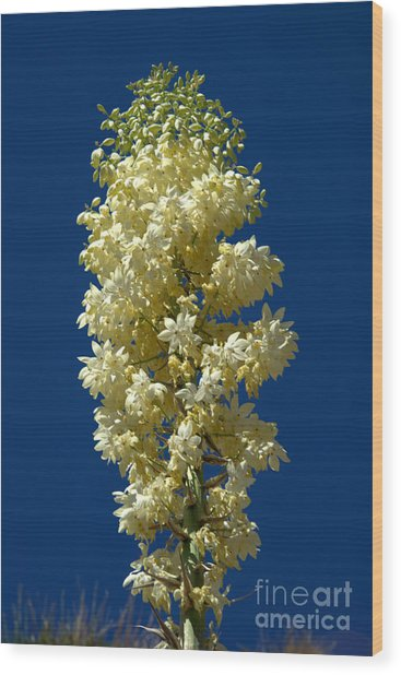 Yucca In Bloom Wood Print