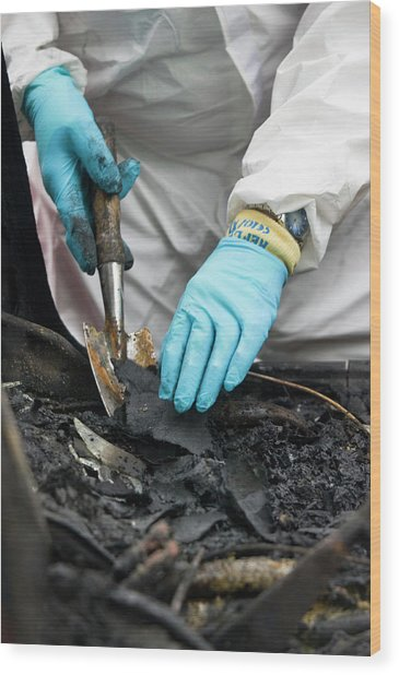 Forensics Training Wood Print by Jim Varney/science Photo Library