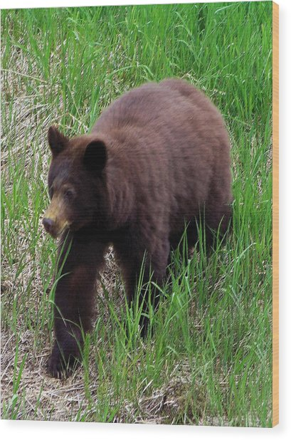 100414 Black Bear Wood Print