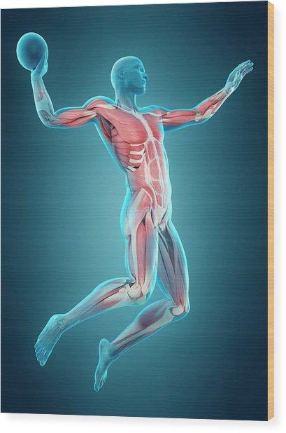 Handball Player Wood Print by Sebastian Kaulitzki/science Photo Library