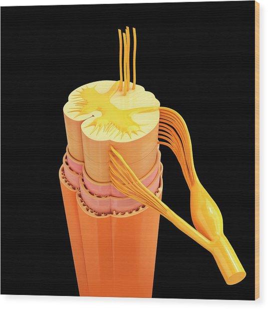 Human Spinal Chord Wood Print by Pixologicstudio