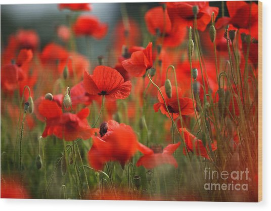 Poppy Dream Wood Print