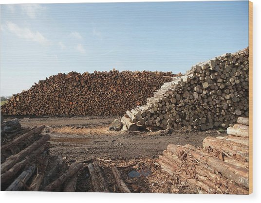 Wood Chip Fuel Production Wood Print by Lewis Houghton/science Photo Library