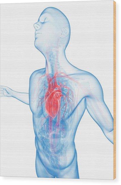 Human Vascular System Wood Print by Sebastian Kaulitzki