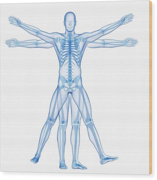 Human Skeletal System Wood Print by Sebastian Kaulitzki