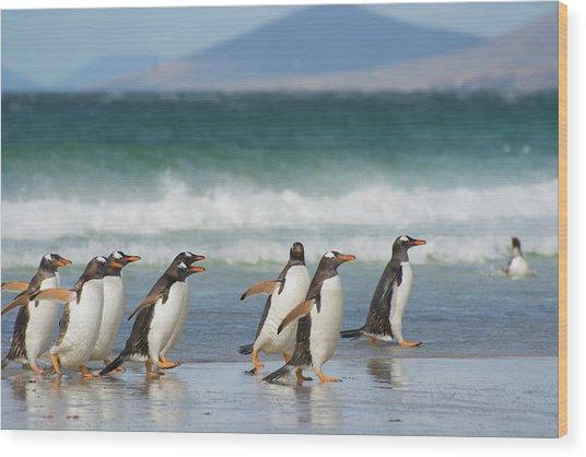 Falkland Islands Wood Print by Inger Hogstrom