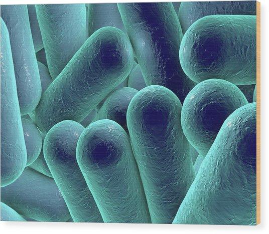 Rod-shaped Bacteria Wood Print