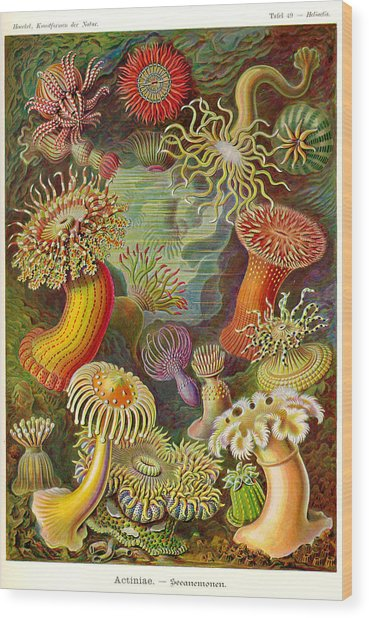 ernst haeckel art forms in nature pdf